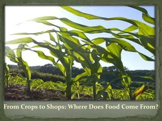 From Crops to Shops: Where Does Food Come From?