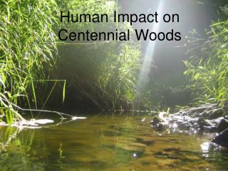 Human Impact on Centennial Woods