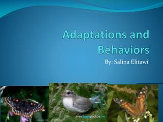 Adaptations and Behaviors