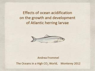Effects of ocean acidification  on the growth and development  of Atlantic herring larvae