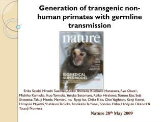 Generation of transgenic non- human primates with germline transmission