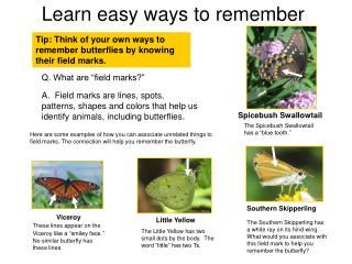 Tip: Think of your own ways to remember butterflies by knowing their field marks.