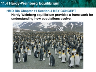 Hardy-Weinberg equilibrium describes populations that are not evolving .