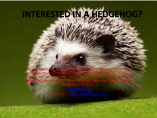 INTERESTED IN A HEDGEHOG?