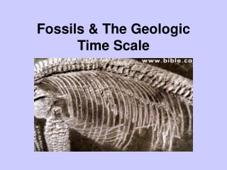 Fossils & The Geologic Time Scale