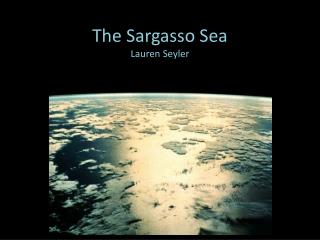 The Sargasso Sea Lauren Seyler