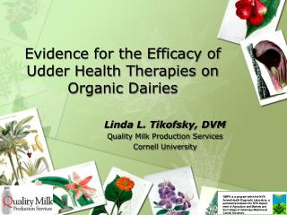 Evidence for the Efficacy of Udder Health Therapies on Organic Dairies