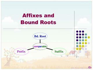 Affixes and  Bound Roots