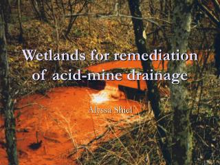 Wetlands for remediation of acid-mine drainage