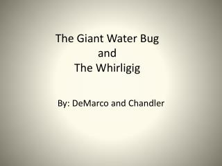 The Giant Water Bug  and  The Whirligig