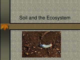 Soil and the Ecosystem