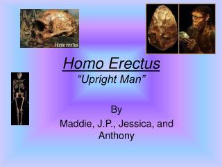 "Homo Erectus ""Upright Man"""