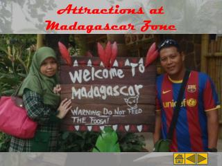 Attractions at Madagascar Zone