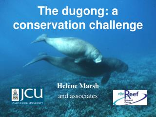 The dugong: a conservation challenge