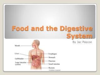Food and the Digestive System