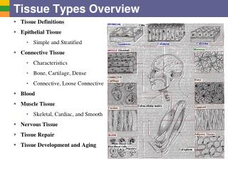 Tissue Types Overview