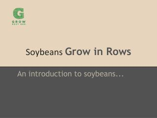 Soybeans  Grow in Rows