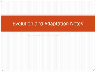 Evolution and Adaptation Notes