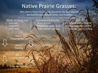 Native Prairie Grasses: