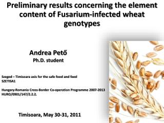 Preliminary results concerning the element content  of  Fusarium-infected wheat genotypes