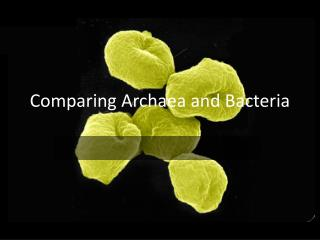 Comparing  Archaea  and Bacteria