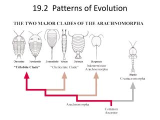 19.2  Patterns of Evolution