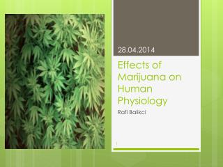 Effects of Marijuana on Human Physiology