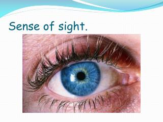 Sense  of  sight .