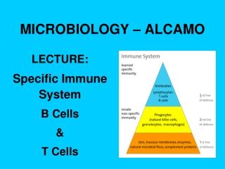 MICROBIOLOGY – ALCAMO