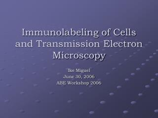 Immunolabeling of Cells and Transmission Electron Microscopy