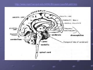 Brain-Behavior Relationships