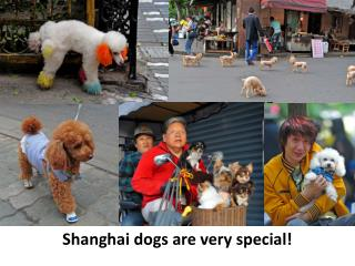 Shanghai dogs are very special!