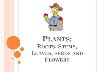 Plants: Roots, Stems, Leaves, seeds and Flowers