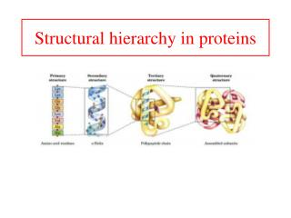 Structural hierarchy in proteins