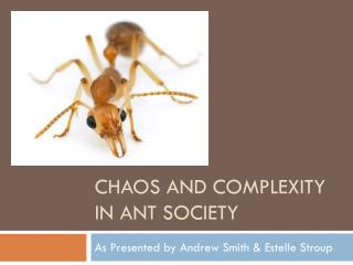 Chaos And Complexity in ant society