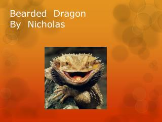 Bearded  Dragon By  Nicholas