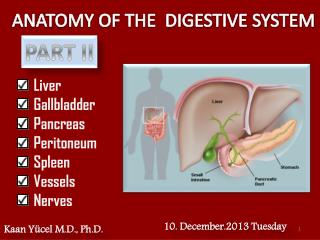 ANATOMY OF THE  DIGESTIVE SYSTEM