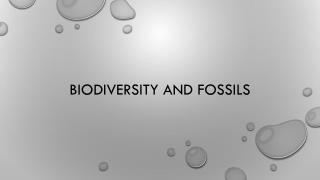 Biodiversity  and Fossils