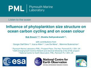 Influence of phytoplankton size structure  on  ocean carbon cycling and on ocean colour