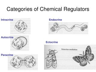 Categories of Chemical Regulators