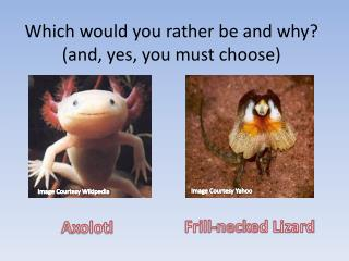 Which would you rather be and why? (and, yes, you must choose)