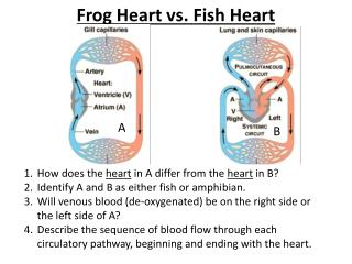 Frog Heart vs. Fish Heart