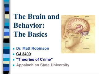 The Brain and Behavior: The Basics