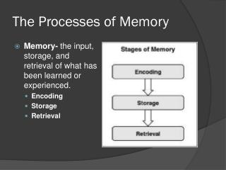 The Processes of Memory