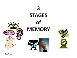 3  STAGES  of  MEMORY
