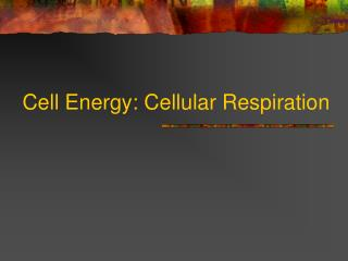 Cell Energy: Cellular Respiration