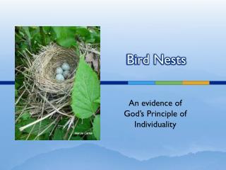 Bird Nests