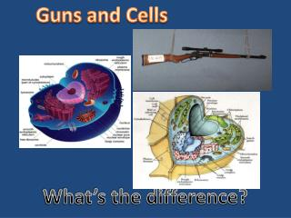 Guns and Cells