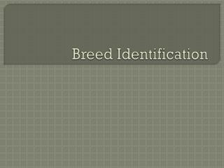 Breed Identification