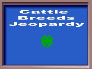 Cattle  Breeds Jeopardy